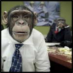 Chimps on the team